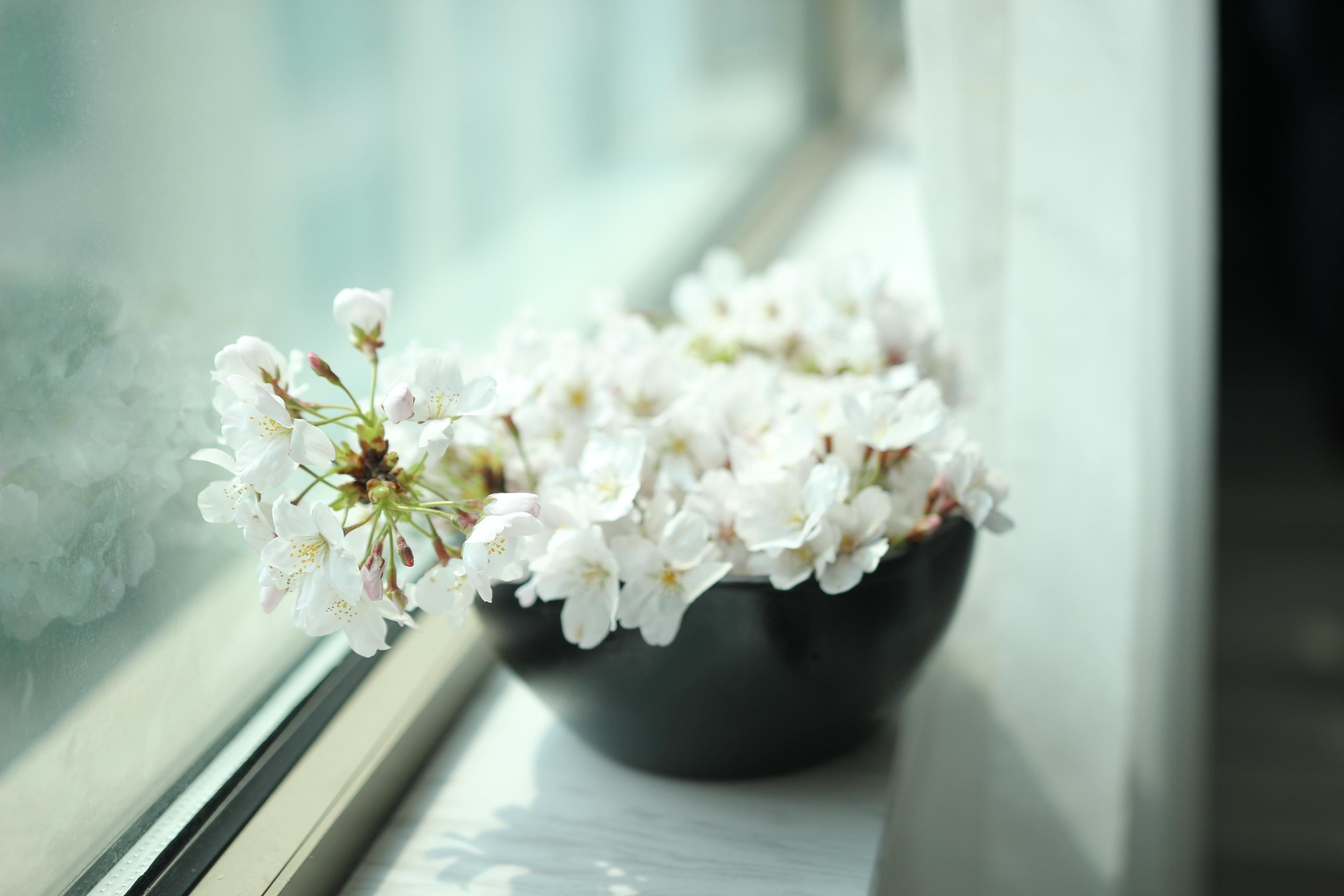 武汉-春风十里,不如樱花树下的你